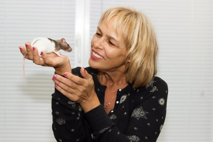 Могут ли крысы заразить бешенством?