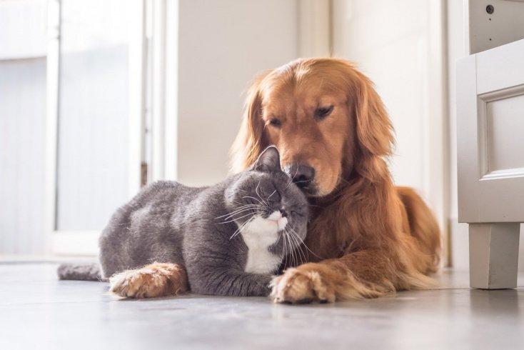Какие животные лучше всего помогают в анималотерапии?