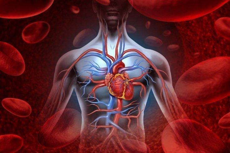 Варианты недостаточности: особенности циркуляции крови
