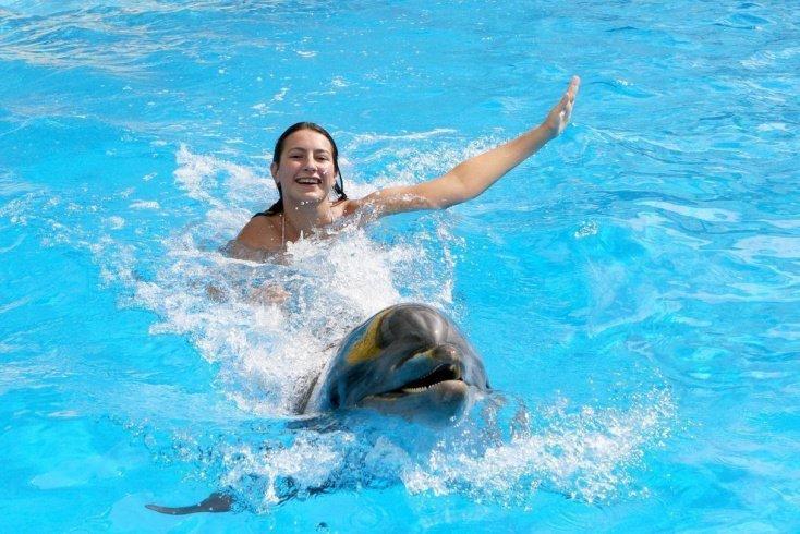 Дельфинотерапия и ее виды