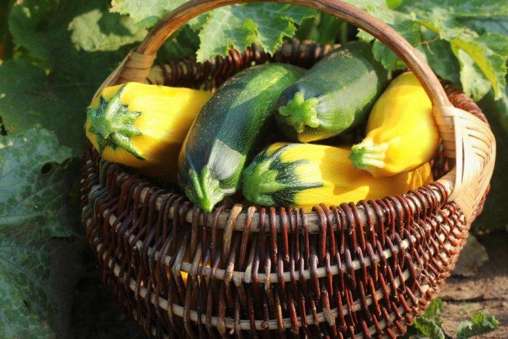 Какие овощи могут принести наибольшую пользу?