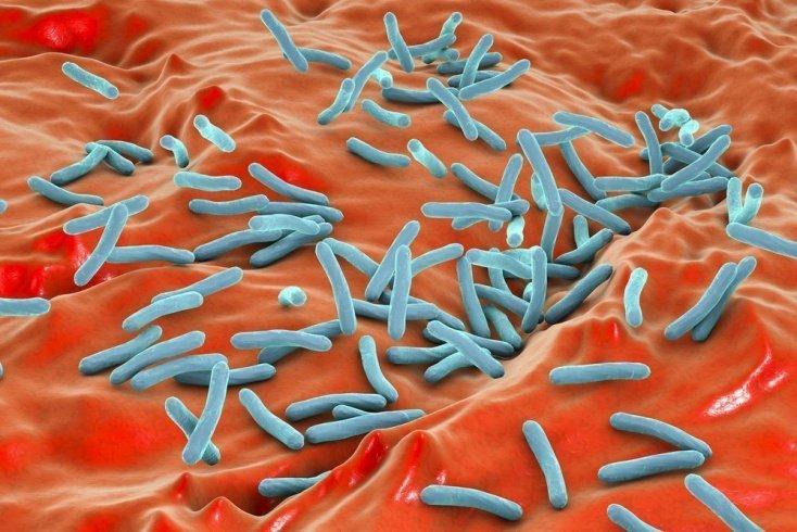 Туберкулезные микобактерии