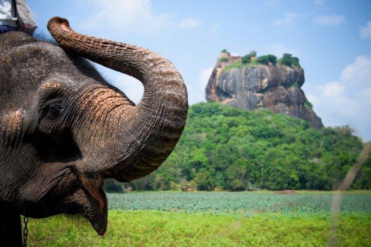 Что нужно знать школьнику про чай, слонов и каучук?
