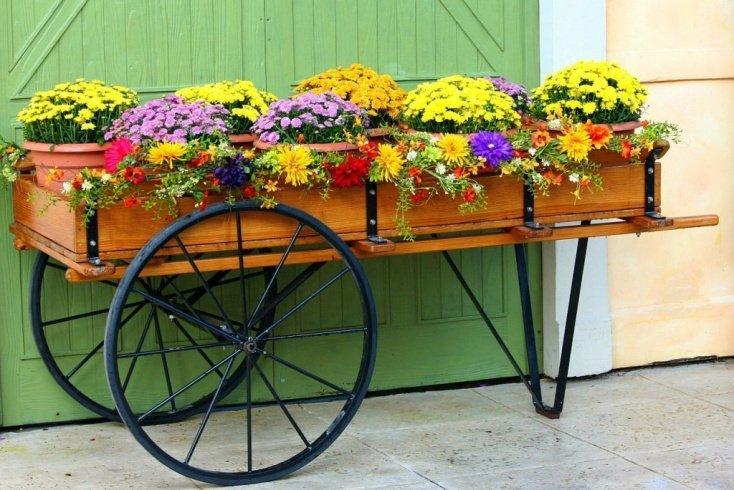 Уход за цветами: разве это не просто?