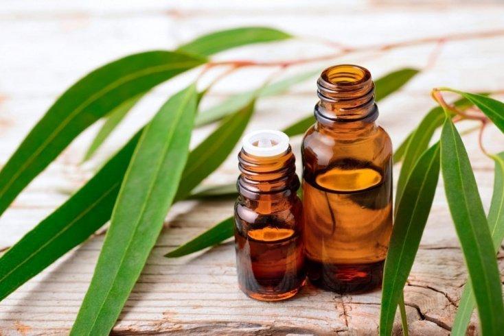 Эвкалипт — растение, используемое для местного лечения болезней