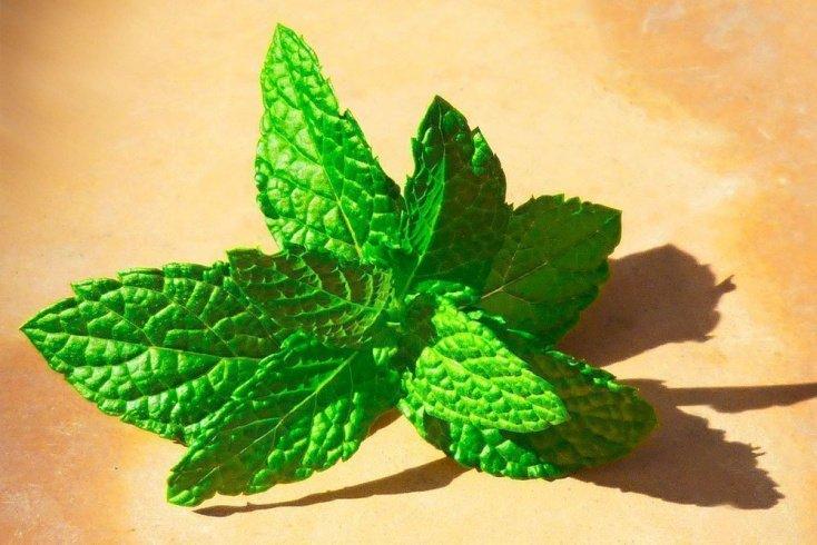 Быстрое похудение с помощью ароматной травы