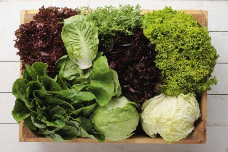 Какую зелень можно добавлять в рацион питания ребенка