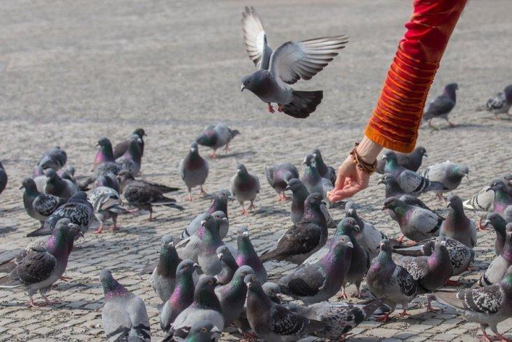Правила общения с городскими бездомными животными и птицами