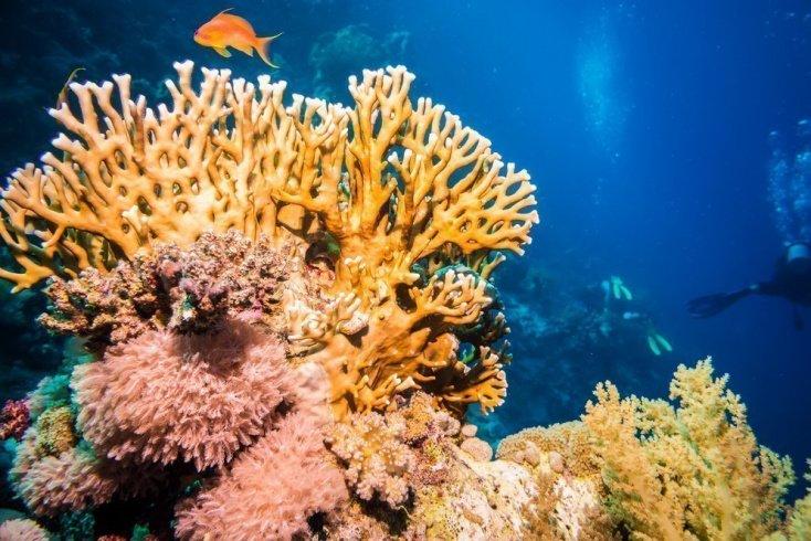 Ожог кораллом и губками