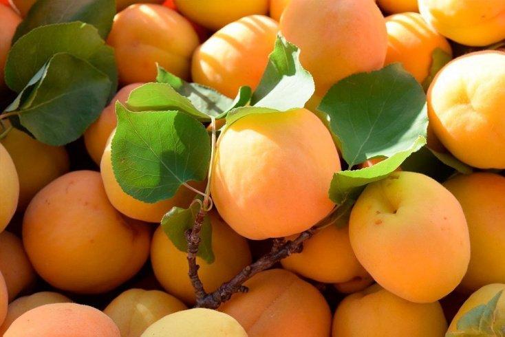 Питание с использованием сезонных фруктов: укрепляем здоровье летом