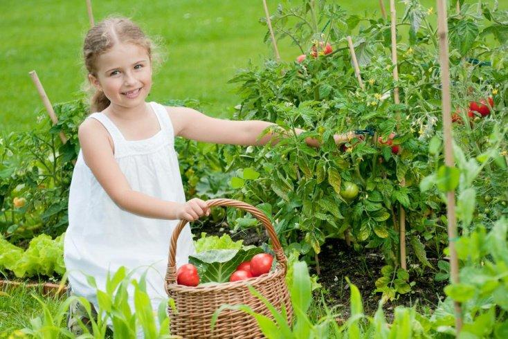 Принципы питания по рецептам для укрепления иммунитета и здоровья