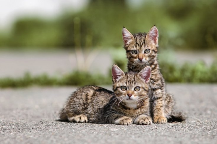Кошачьи болезни: пушистая угроза
