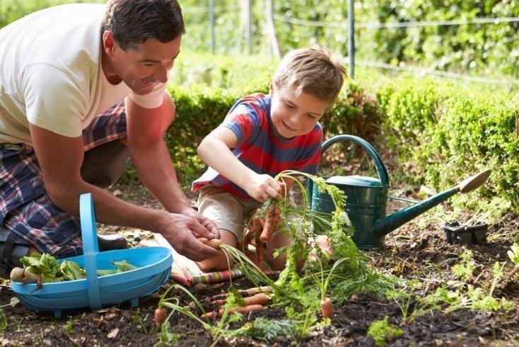 Родителям на заметку: растения, которые порадуют кроху быстрым ростом и скорым созреванием