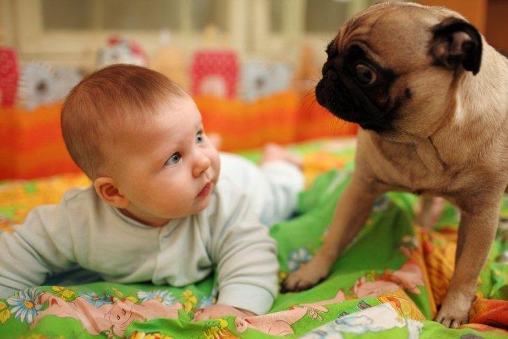 Дети и звери: осторожно