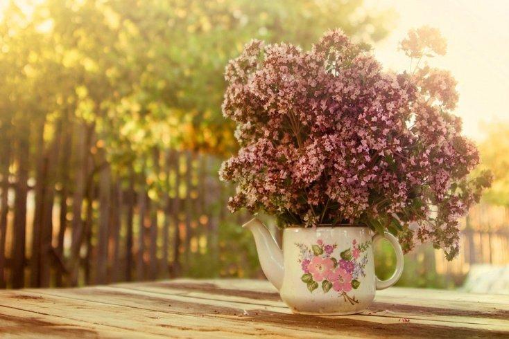 Душица — трава материнка на страже красоты и хорошего самочувствия женщин