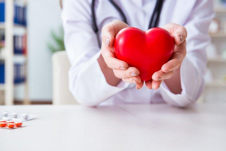 Работа сердечно-сосудистой системы