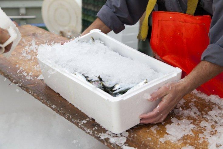 Вся правда о качестве рыбы: замороженная VS свежая