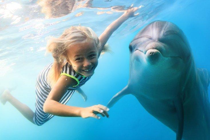 Главная задача взаимодействия детей и дельфинов — положительные эмоции
